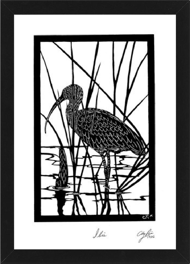 Ibis bird in the water